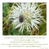 der nährboden für glück, zufriedenheit und freiheit...