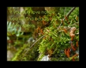 if you truly love nature ...