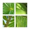 green bits