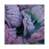 brain veggies