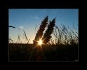 cornfields of my dreams